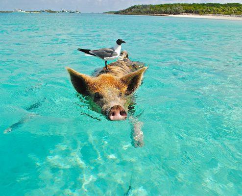 Über das gute Leben von Schweinehunden